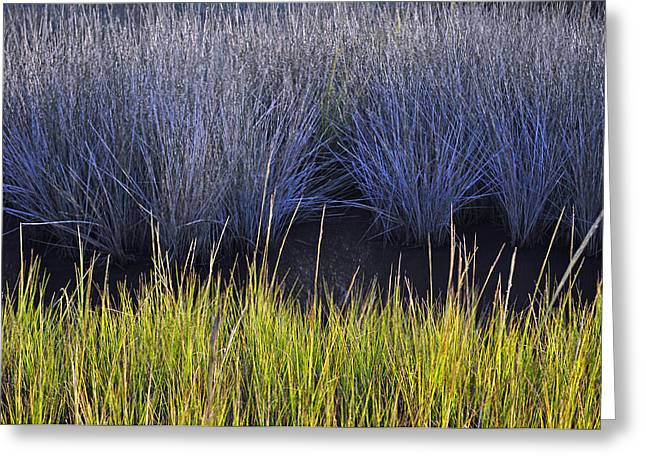 Beach Photograph Greeting Cards - Contrasting Marsh Grasses on Jekyll Island Greeting Card by Bruce Gourley