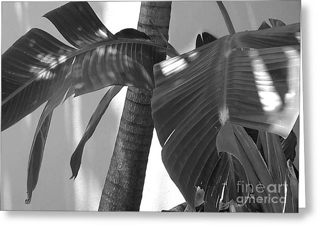 Canoe Waterfall Photographs Greeting Cards - Contrasting Palms Greeting Card by Margaret Juul Ammann