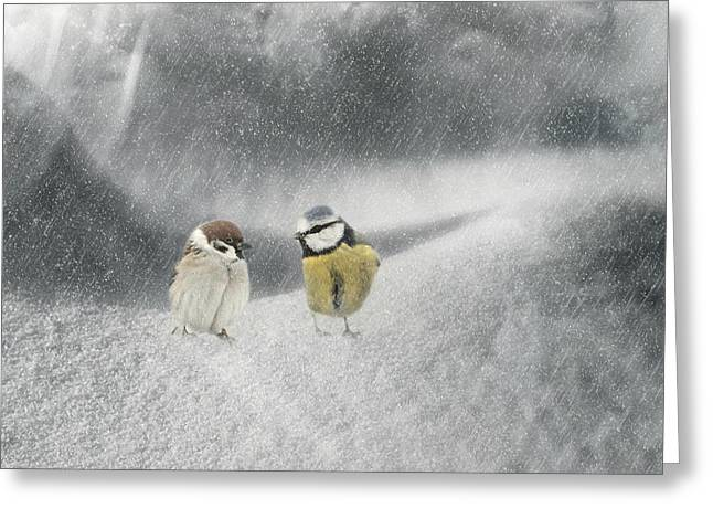Winter Photos Mixed Media Greeting Cards - Conversation In The Snow Greeting Card by Heike Hultsch