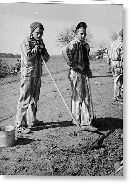 Long Ago Greeting Cards - Convicts Working on the Road in North Carolina 1936 Greeting Card by Mountain Dreams