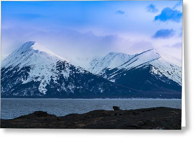 Reflecting Water Greeting Cards - Cook Inlet Greeting Card by Inge Johnsson