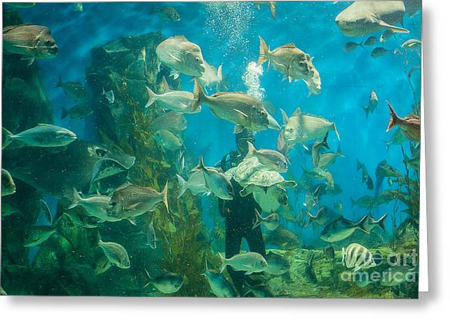 White Shark Greeting Cards - Cool Aquarium Greeting Card by Ray Warren