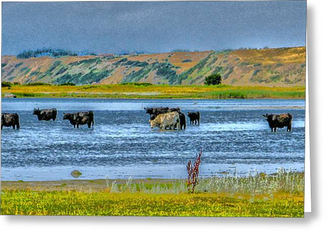 Kim Photographs Greeting Cards - Cool Cows Greeting Card by Kim Lessel