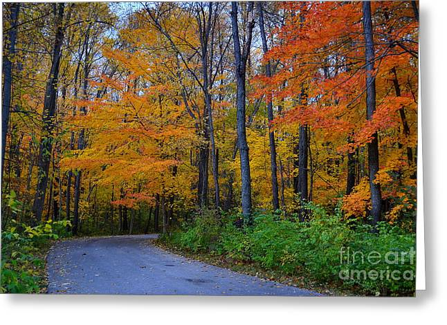 Cool Creek Park In Fall Greeting Card by Amy Lucid