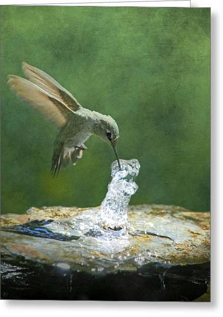 Cool Refreshment Greeting Card by Angie Vogel