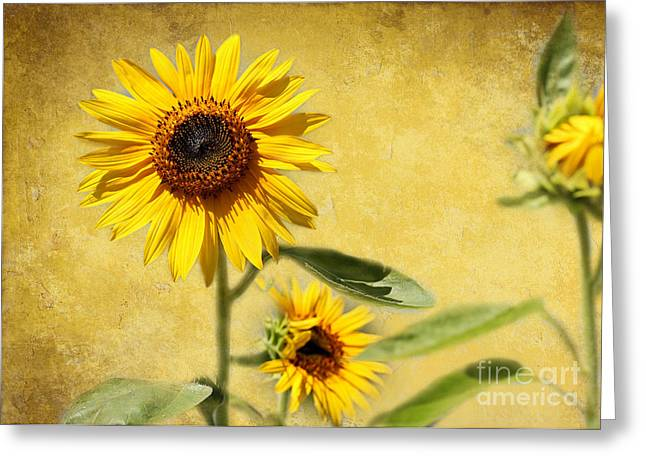 Sunflower Joy Greeting Cards - Cool Sunflowers Greeting Card by Sabrina L Ryan