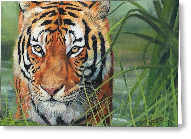 Tiger Print Greeting Cards - Cooling Down Greeting Card by David Stribbling