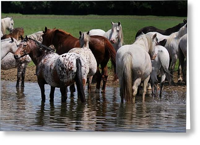 Horse In Water Paint Greeting Cards - Cooling Off Greeting Card by Liz Oliver