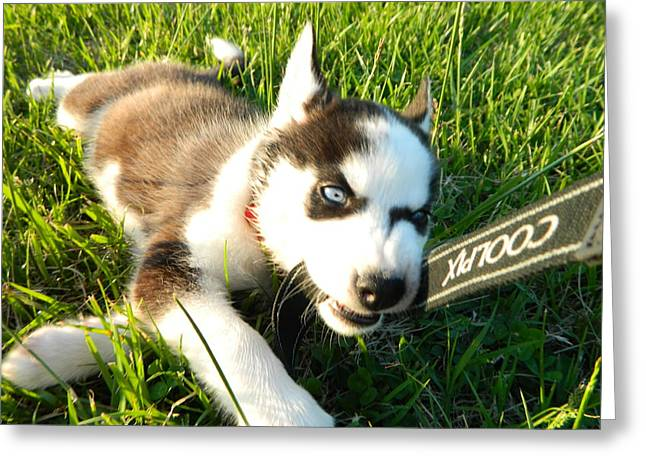 Husky Greeting Cards - Coolpix Puppy Greeting Card by Jessica Coyle