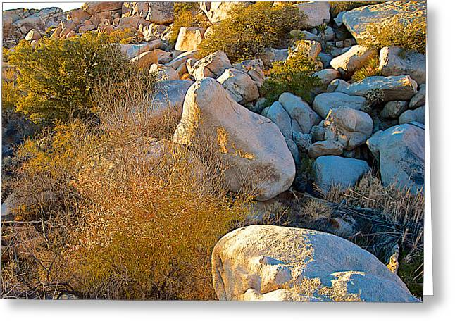The Plateaus Digital Greeting Cards - Coopers Goldenbush in the Rocks near Barker Dam in Joshua Tree NP-CA Greeting Card by Ruth Hager