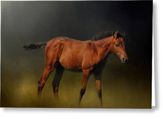 Copper Colt In The Moonlight Greeting Card by Jai Johnson