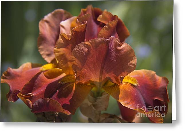 Russet Greeting Cards - Copper Gem Greeting Card by Teresa Mucha