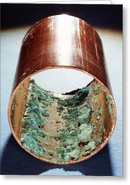 Europe Greeting Cards - Copper pipe deposits Greeting Card by Science Photo Library