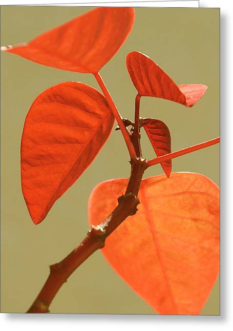 Red Leaves Greeting Cards - Copper Plant Greeting Card by Ben and Raisa Gertsberg