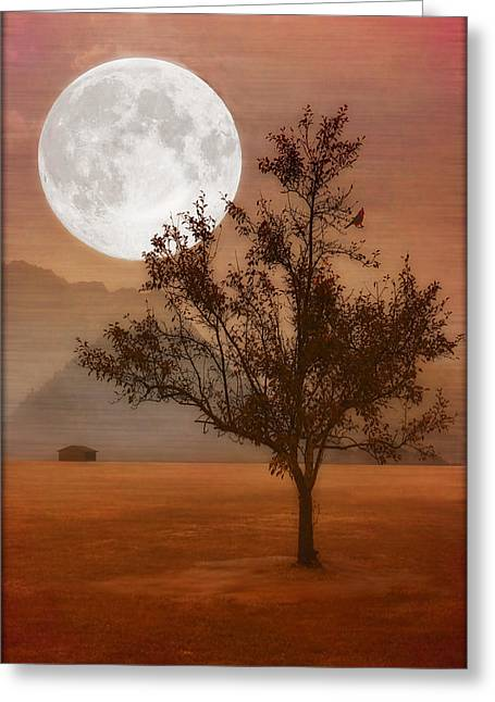 Mountain Cabin Greeting Cards - Copper Tree Greeting Card by Tom York Images