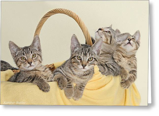 Photos Of Kittens Greeting Cards - Copy Cats Greeting Card by Kimber  Butler