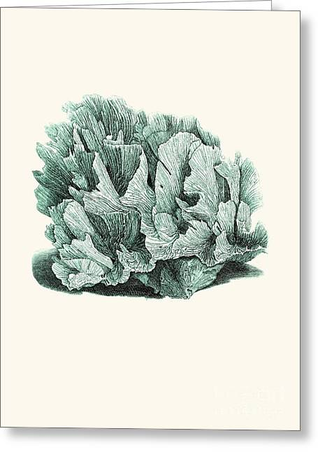 Alga Drawings Greeting Cards - Coral Blue Greeting Card by Patruschka Hetterschij