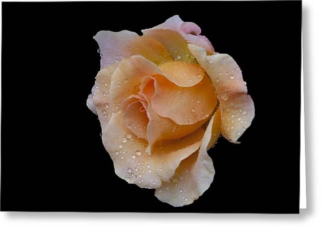 Floral Digital Art Digital Art Greeting Cards - Coral Cutie Greeting Card by Doug Norkum