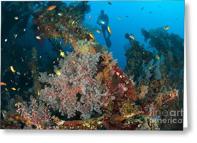 Biodiversity Greeting Cards - Coral Encrusted Wreckage On The Liberty Greeting Card by Steve Jones