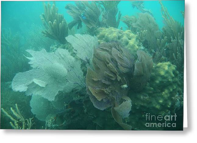 Coral Fans Greeting Card by Adam Jewell