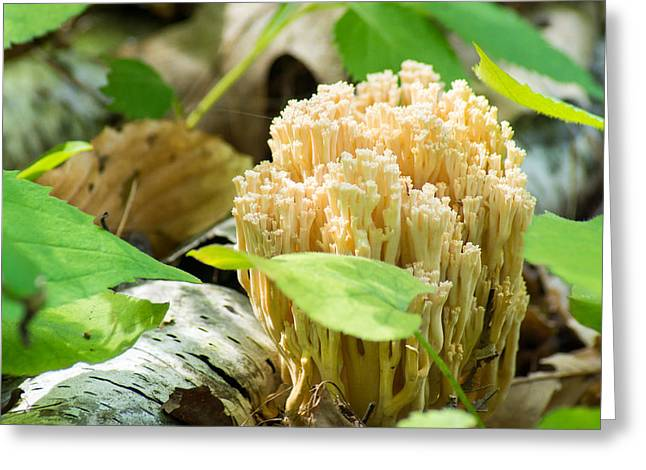Forest Floor Greeting Cards - Coral Fungi Greeting Card by Bill Pevlor