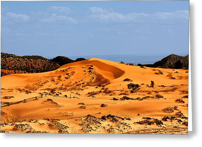 Western Usa Greeting Cards - Coral Pink Sand Dunes Utah Greeting Card by Christine Till