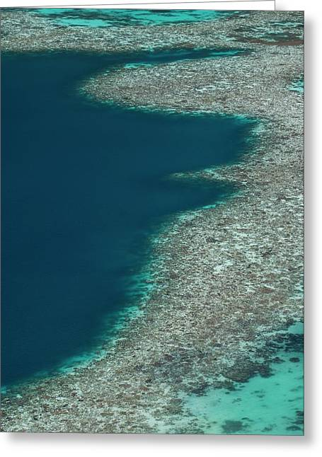 Coral Reef In Shallow Water Greeting Card by Scubazoo