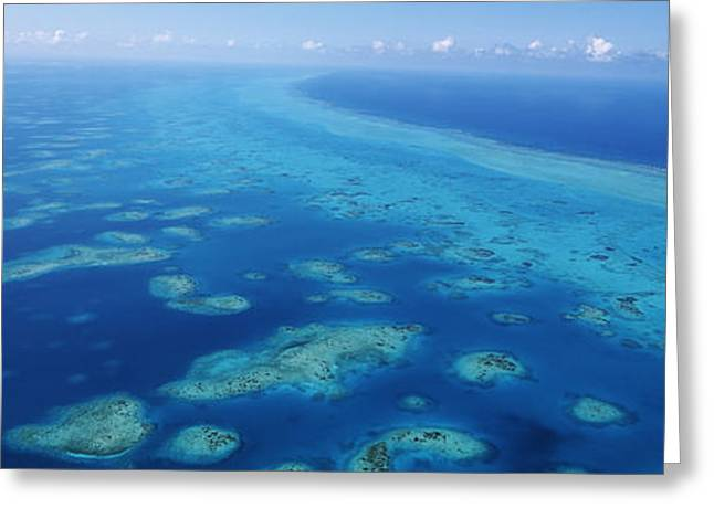 Belize Greeting Cards - Coral Reef In The Sea, Belize Barrier Greeting Card by Panoramic Images