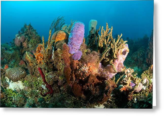 Recently Sold -  - Ocean Panorama Greeting Cards - Coral reef Greeting Card by Joe Belanger