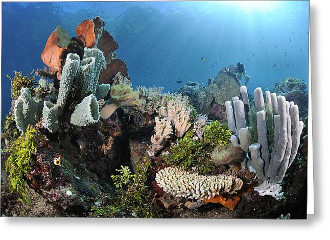Lembeh Strait Greeting Cards - Coral Reef Lembeh Strait Indonesia Greeting Card by Ron Offermans