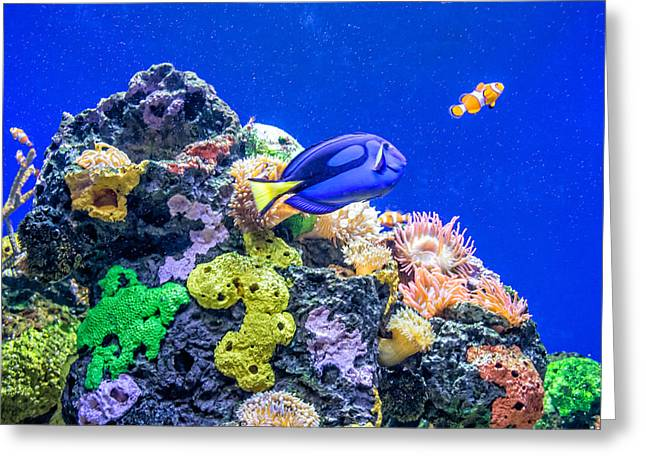 Aquarium Fish Greeting Cards - Coral Reef Greeting Card by Steve Harrington