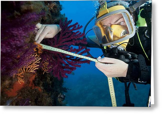 Nature Study Greeting Cards - Coral research Greeting Card by Science Photo Library