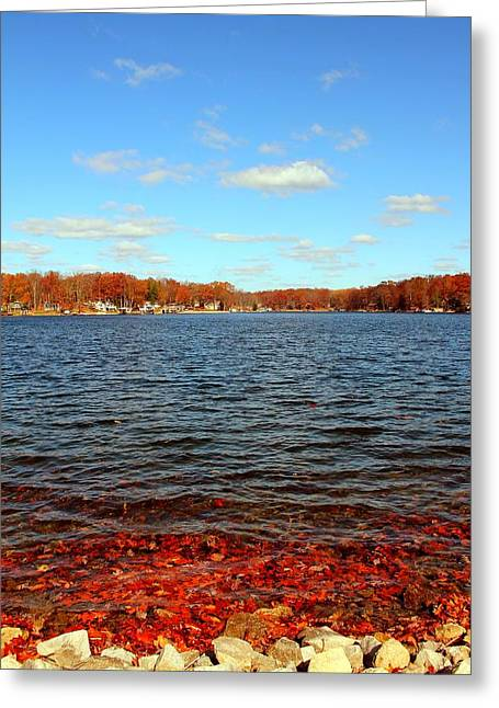 Tree Leaf On Water Greeting Cards - Cordry Lake in the Fall Greeting Card by Abril Gonzalez
