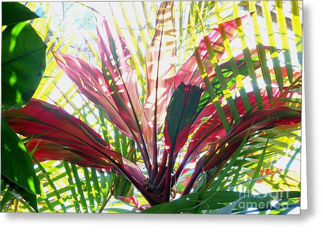 Cordylines Greeting Cards - Cordyline and Palm Leaves Greeting Card by Caroline Street