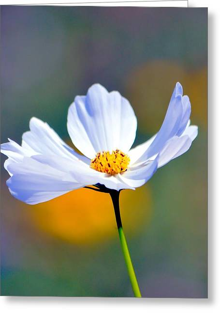 Nature Center Greeting Cards - Coreopsis In White Greeting Card by Deena Stoddard