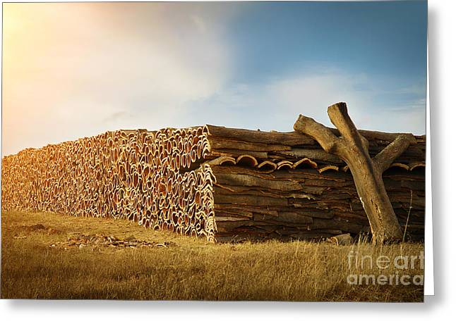 Quercus Greeting Cards - Cork Harvesting Greeting Card by Carlos Caetano