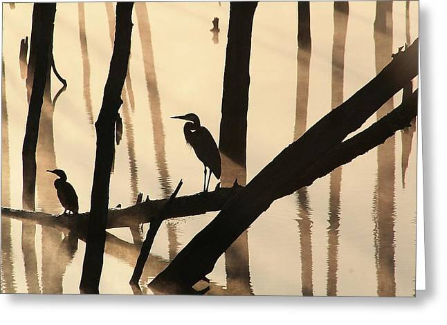 Manasquan Reservoir Greeting Cards - Cormorant and the Heron Greeting Card by Roger Becker