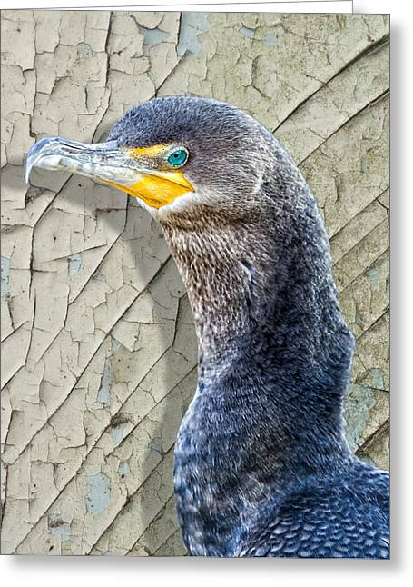 Seabirds Digital Art Greeting Cards - Cormorant By Cracked Paint Greeting Card by Bill Tiepelman