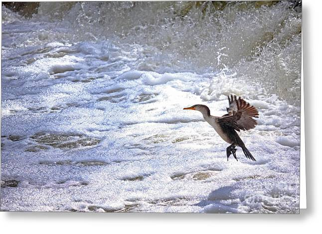Double-crested Cormorant Greeting Cards - Cormorant Hunting Greeting Card by Charline Xia
