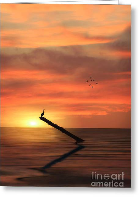 Sunset Seascape Greeting Cards - Cormorant In The Sunset Greeting Card by Tom York Images