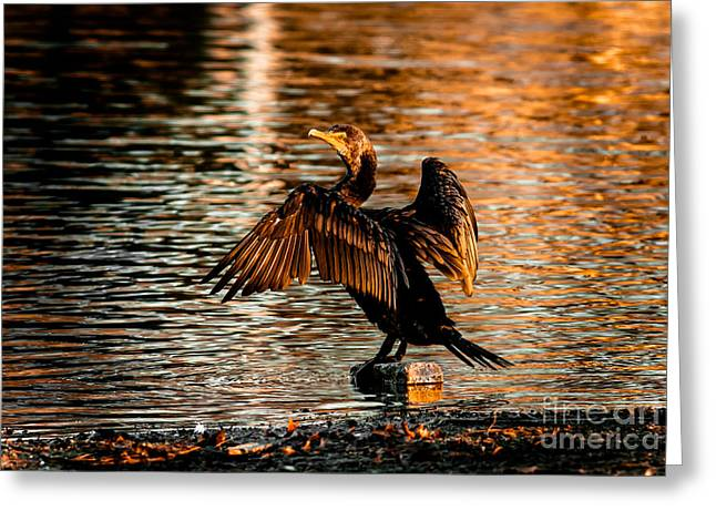 Cabin Window Greeting Cards - Cormorant On Gold Greeting Card by Robert Frederick
