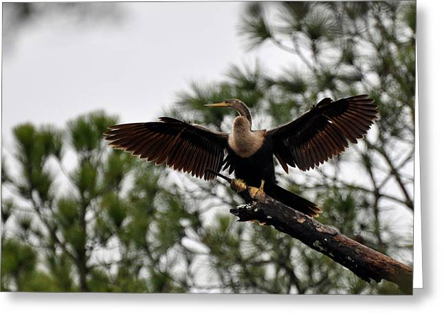 Reflection In Water Greeting Cards - Cormorant on Jekyll Island Greeting Card by Bruce Gourley
