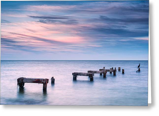 Falmouth Massachusetts Greeting Cards - Cormorant Sunset Greeting Card by Michael Blanchette