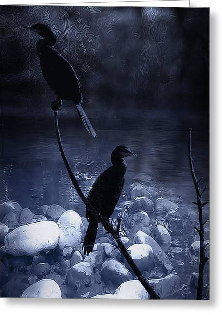 Big Blue Marble Greeting Cards - Cormorants at Dusk Greeting Card by Kelly Gibson