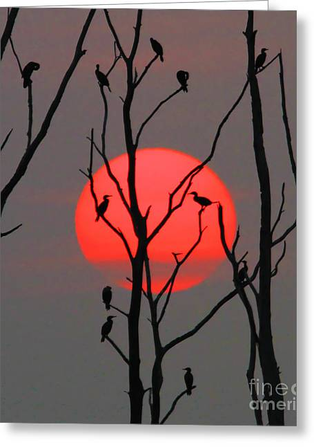 Manasquan Reservoir Greeting Cards - Cormorants at Sunrise Greeting Card by Roger Becker