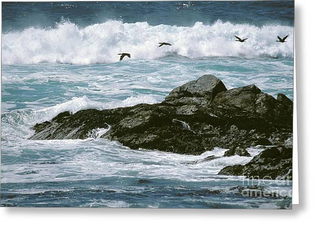 Flying Animal Greeting Cards - Cormorants Greeting Card by James L. Amos