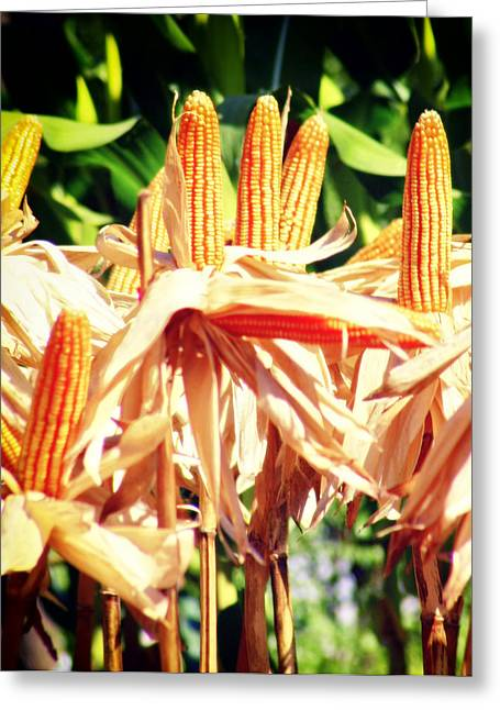 Corn Kernel Greeting Cards - Corn Greeting Card by A Rey