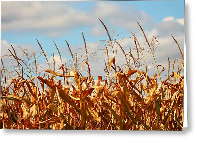 Constable Greeting Cards - Corn as high as the Sky Greeting Card by Rhonda Humphreys
