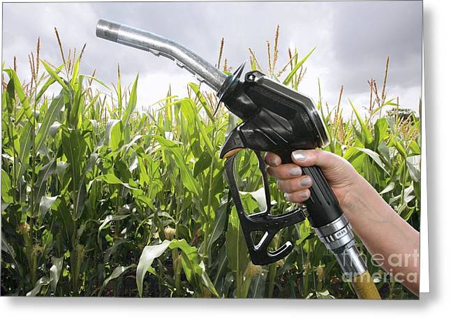 Industrial Concept Greeting Cards - Corn Biofuel, Conceptual Image Greeting Card by Victor de Schwanberg