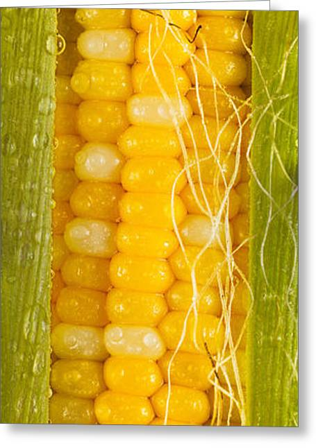 Corn Kernel Greeting Cards - Corn Cob Silk Greeting Card by Steve Gadomski